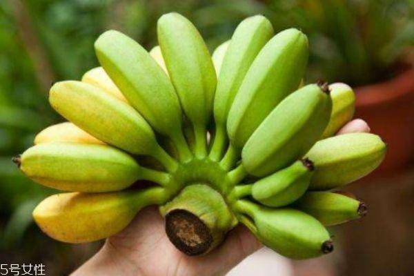 吃芭蕉有什么要注意的呢 什么人群不能吃芭蕉呢