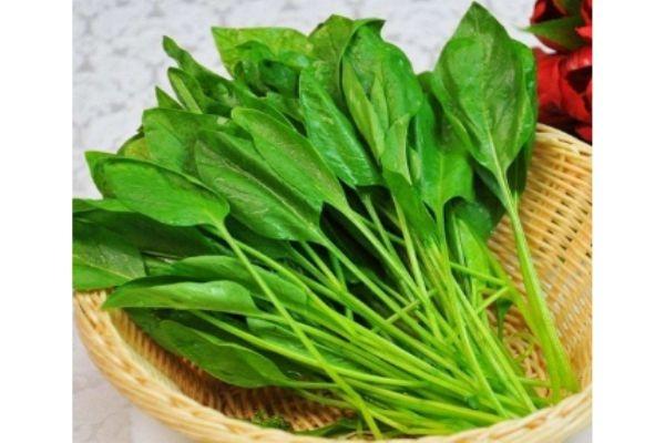 菠菜生长在什么环境中呢 菠菜多少钱一斤呢