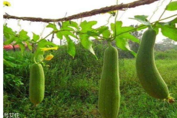 瓠瓜怎么做好吃呢 瓠瓜有什么食用禁忌吗