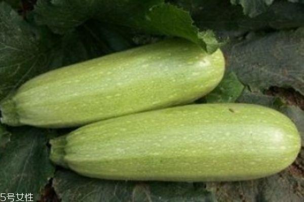 什么是笋瓜呢 笋瓜有什么营养价值呢