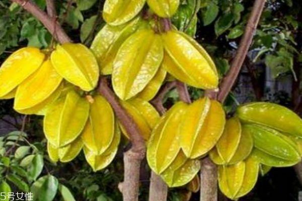 杨桃有什么营养价值呢 吃杨桃有什么好处呢