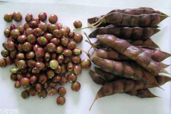 木豆有什么食用禁忌呢 什么人群不能吃木豆呢