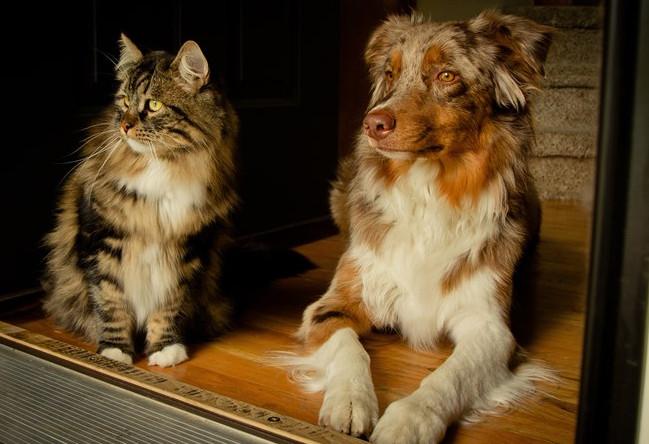 古代人怎么治狂犬病 古代没有狂犬病疫苗为什么还养狗