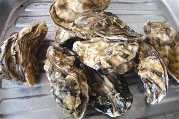 海蛎子冷藏还是冷冻 海蛎子冷藏能放多久