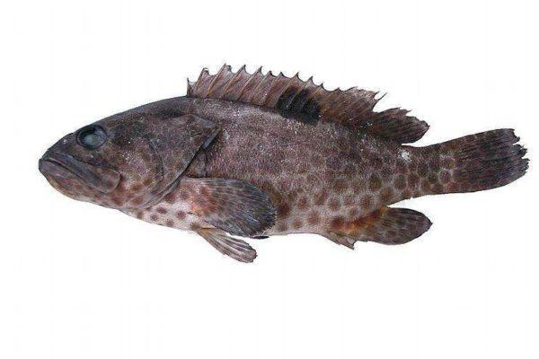 什么鱼最好吃呢 草鱼好吃吗