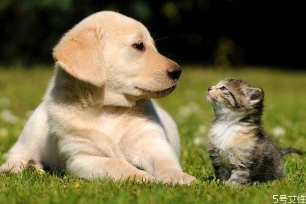 养宠物有什么好处呢 为什么要养宠物呢
