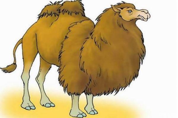 骆驼肉的热量高吗 骆驼肉的的热量有多少呢
