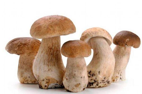什么是草菇呢 草菇应该怎么吃呢