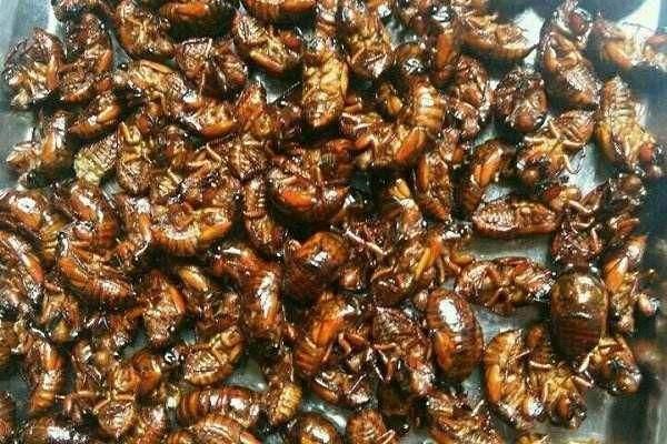 蝉蛹怎么清洗呢 蝉蛹怎么炸更酥脆呢