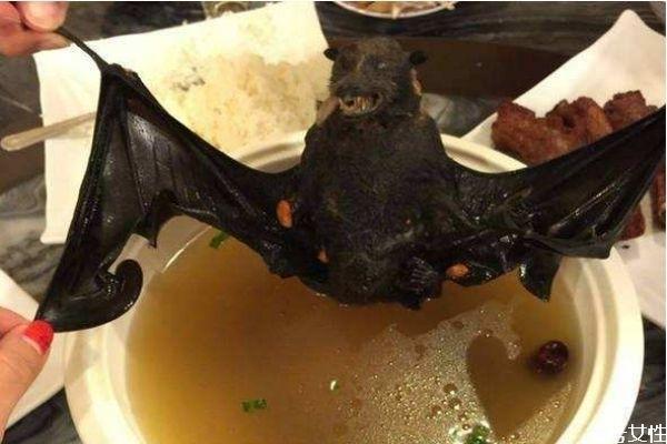 蝙蝠可以吃吗 蝙蝠有什么营养价值呢