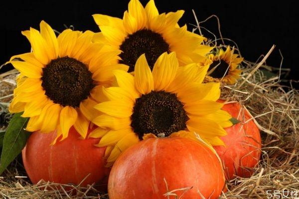 向阳花的花语是什么呢 向阳花的种植需要注意什么呢