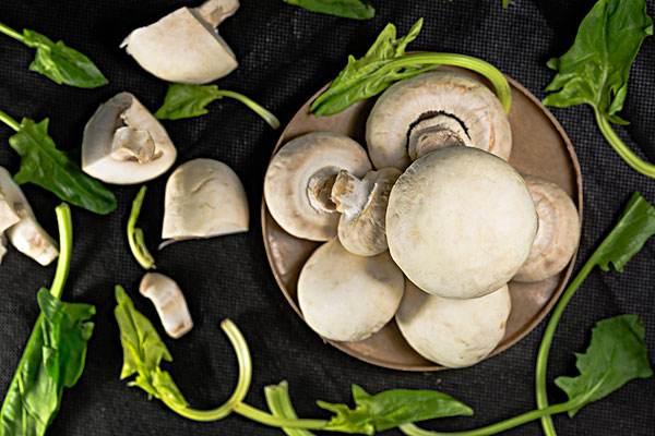口蘑菇婴儿可以吃吗 婴儿吃口蘑菇有什么功效