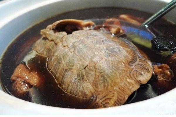 乌龟有什么赢价值呢 乌龟怎么做好吃呢