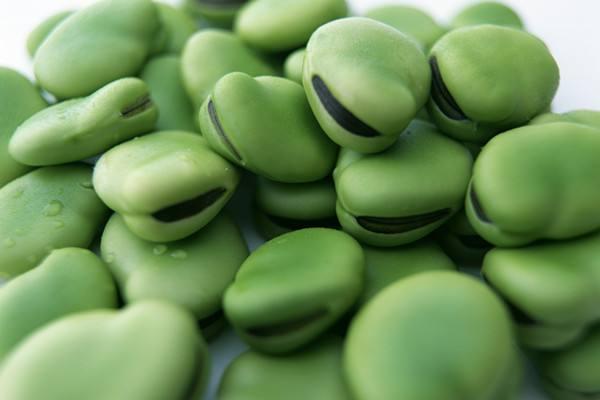 腌蚕豆怎么做好吃 蚕豆为什么不可以吃生的