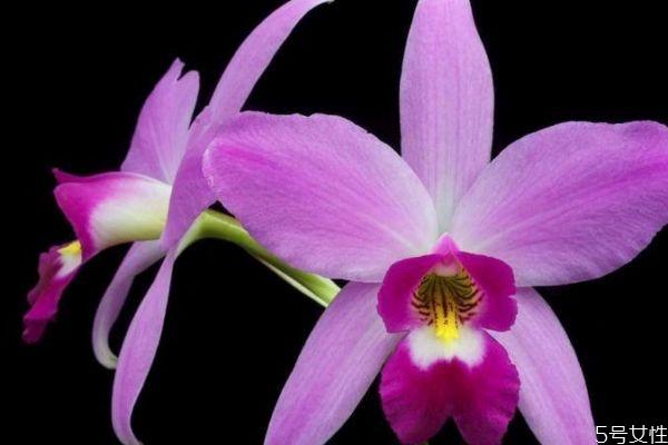 卡特兰是一种什么植物呢 卡特兰的作用有什么呢