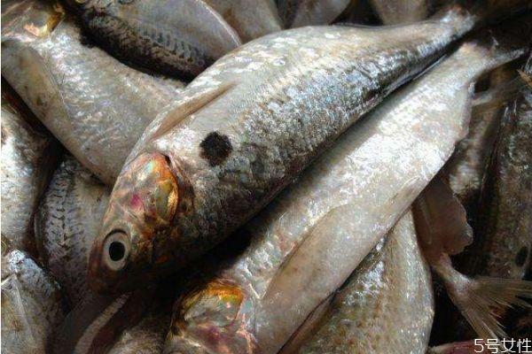 吃小黄鱼有什么好处呢 小黄鱼怎么做好吃呢