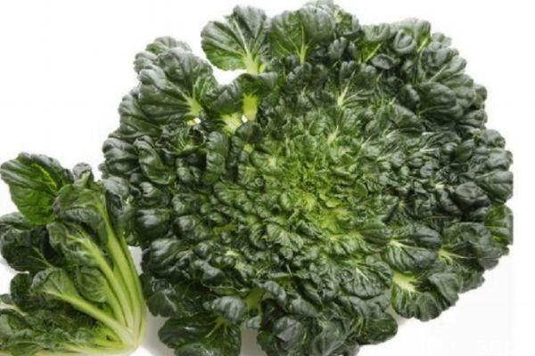 什么是乌塌菜呢 吃乌塌菜有什么作用呢