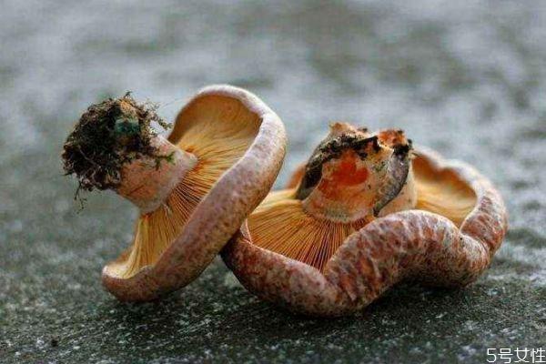 松乳菇怎么做好吃呢 松乳菇应该怎么挑选呢