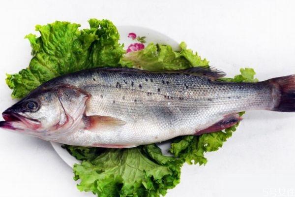 什么是海鲈鱼呢 海鲈鱼有什么营养价值呢