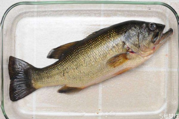 吃海鲈鱼有什么好处呢 海鲈鱼怎么做好吃呢
