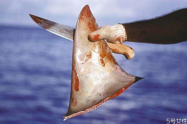 什么是鱼翅呢 鱼翅有什么营养价值呢