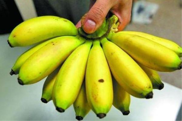 芭蕉吃多了有什么坏处 一天适合吃几根芭蕉