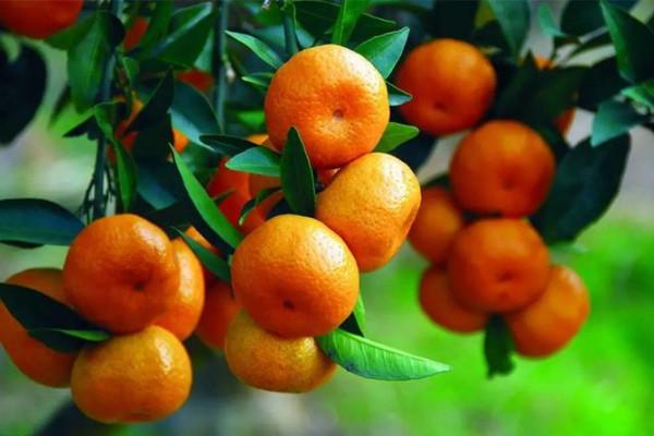 橘子和什么一起吃会拉肚子 吃橘子腹泻怎么办