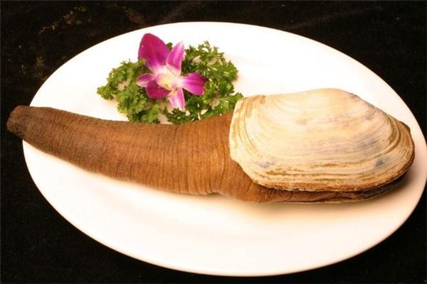 象拔蚌是什么东西 象拔蚌的功效与作用