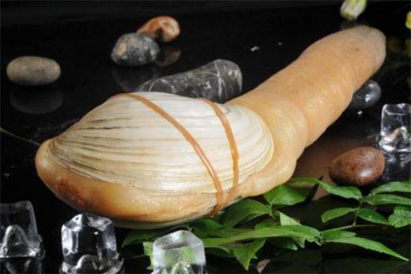 象拔蚌是海鲜还是河鲜 象拔蚌是发物吗