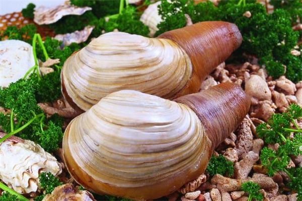 象拔蚌可以生吃吗 象拔蚌有寄生虫吗
