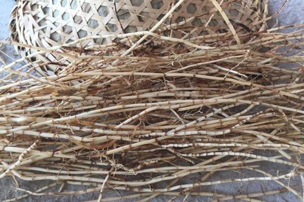 什么是茅草根 茅草根有什么功效