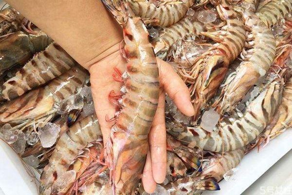 吃竹节虾有什么注意的呢 竹节虾怎么做好吃呢