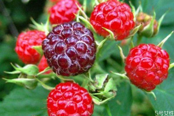 什么是山莓呢 山莓有什么营养价值呢