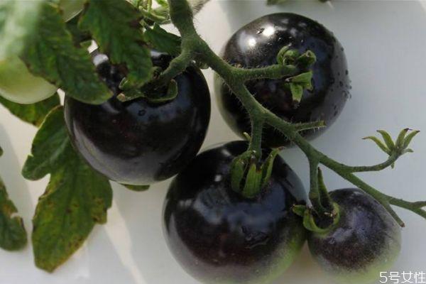 黑番茄可以怎么吃呢 吃黑番茄有什么注意的呢