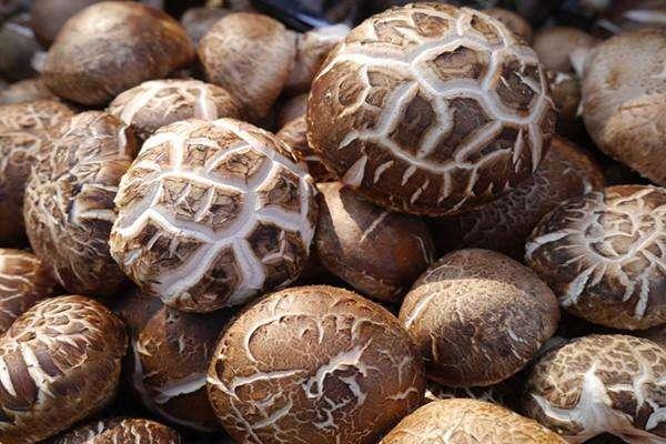 新鲜香菇怎么晒干 新鲜香菇要焯水吗