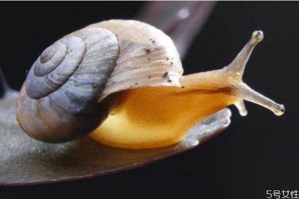 蜗牛美容有效果吗 什么是蜗牛美容呢