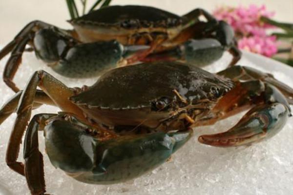 青蟹能用淡水养吗 青蟹死了多久不能吃