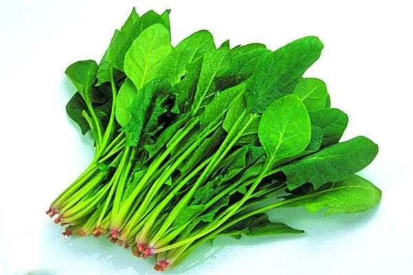 吃菠菜养胃吗 菠菜搭配什么有营养高