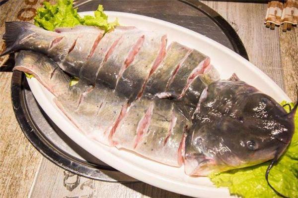清江鱼和鲶鱼的区别 清江鱼和鲶鱼哪个好吃