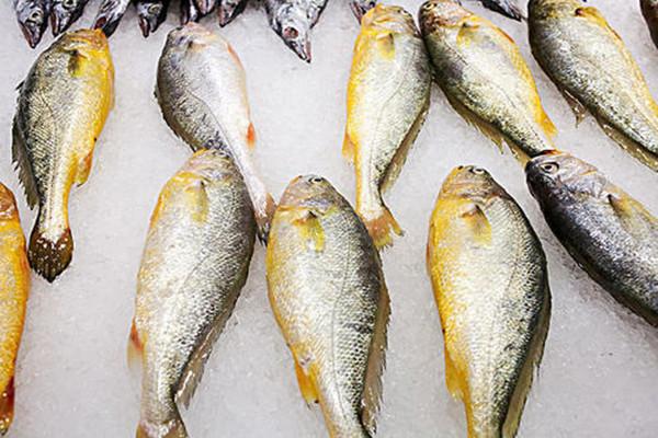 常吃黄鱼有什么好处 黄鱼属于发物吗