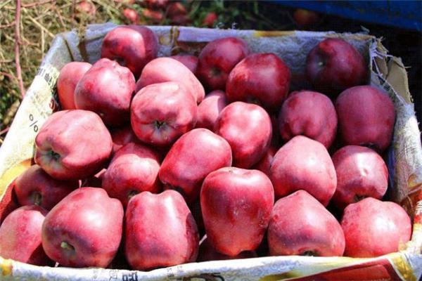 花牛苹果和红富士哪个好 花牛苹果和普通苹果的区别