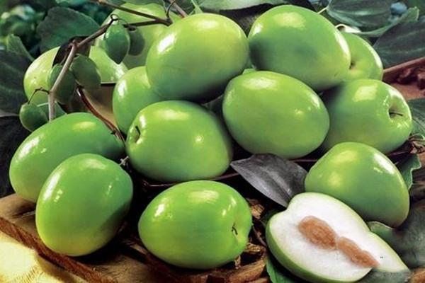 青枣一次性适合吃多少 什么季节吃青枣最好