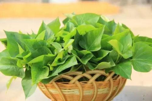 红薯叶有减肥功效吗 红薯叶怎么做减肥