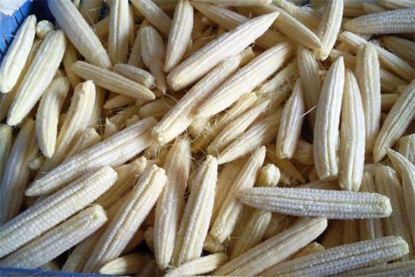 玉米笋可以涮火锅吗 玉米笋可以蒸着吃吗