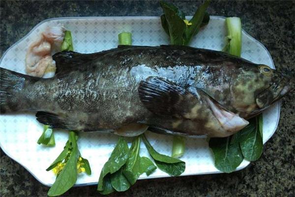 吃石斑鱼可以提高免疫力吗 石斑鱼和什么菜一起吃最好