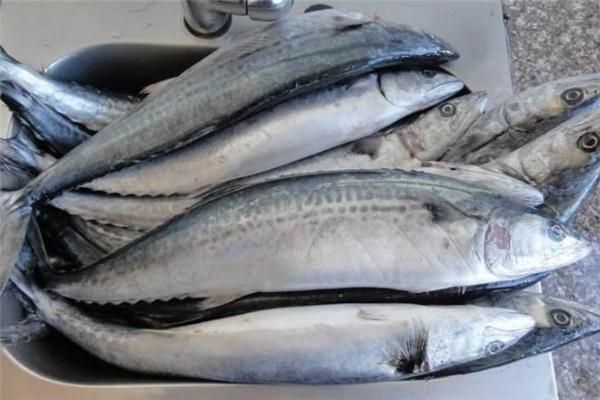 吃鲅鱼会过敏吗 吃鲅鱼过敏怎么办