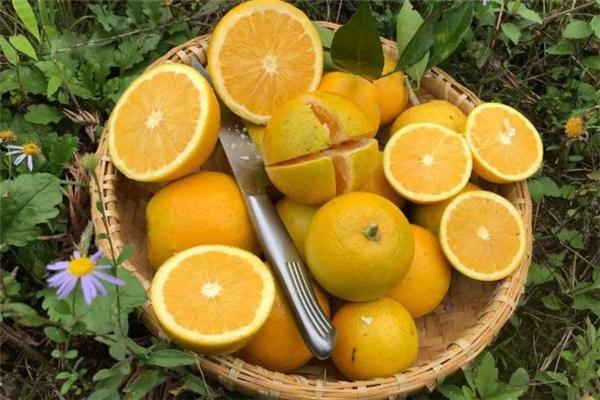 冰糖橙可以煮水喝吗 冰糖橙可以蒸着吃吗