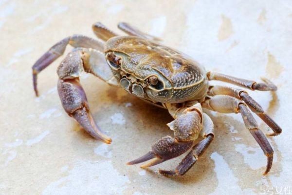 吃螃蟹拉会拉肚子吗 吃螃蟹拉肚子是什么原因