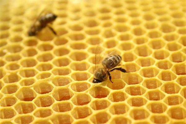 蜂胶什么牌子最好 蜂胶品牌排行榜