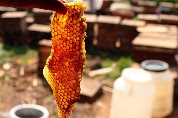 绿蜂胶和黄蜂胶的区别 蜂胶什么颜色最好
